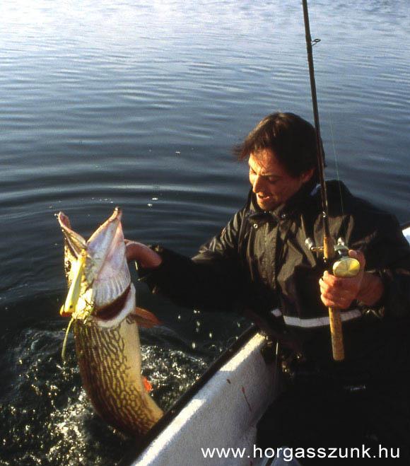 tőkehal horgászat